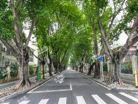 园岭新村实景图