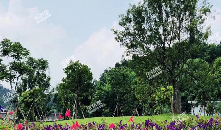 中森公园华府实景1