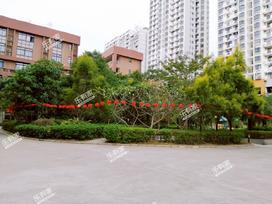 红树绿洲实景图