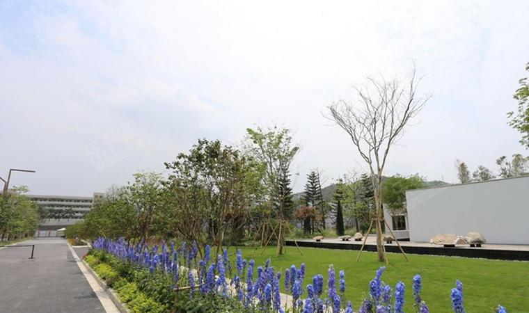 实地蔷薇花园03