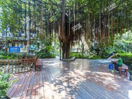 阳光棕榈园三期实景图